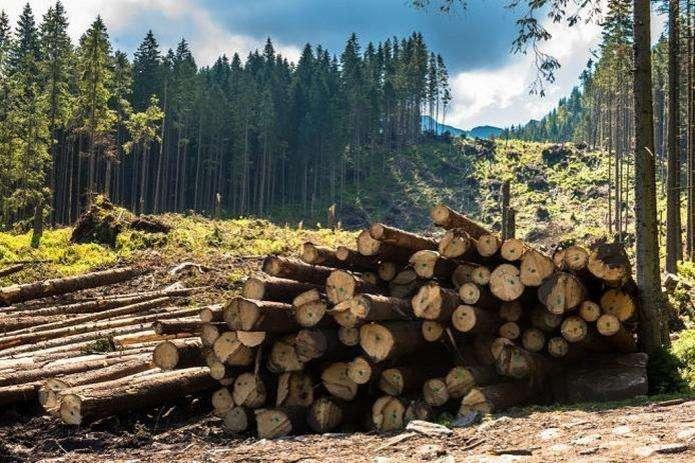 На Буковині головний лісничий постане перед судом за хабар