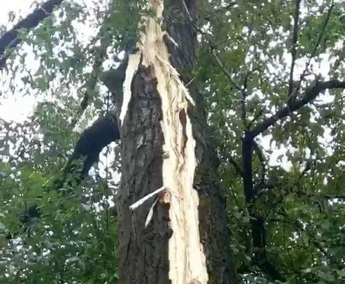 У Чернівцях блискавка влучила у дерево, - очевидці (ФОТО)